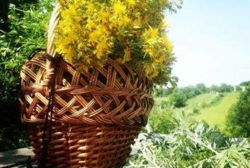 Сьогодні – день, коли збирають лікувальні трави. І погода буде гарною