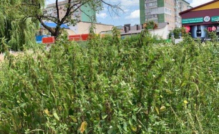 Кропива, будяки, некошена трава: новий «дизайн» тернопільських газонів (ФОТО)