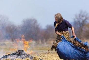 МОЗ хоче заборонити обрізку дерев і спалювання листя