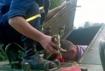 Тернопільські рятувальники визволили з бронетранспортера кошеня, а добрі люди малечу прихистили (ФОТО)