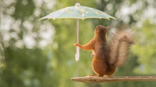 Светри і парасольки сьогодні в тренді: на Тернопільщині осіння погода