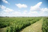 На Тернопільщині використовують новітні технології для сушки зерна з використанням соломи та відходів очистки зерна