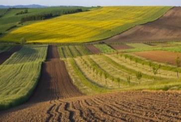 На Тернопільщині за втручання прокуратури у розпорядження держави повертають 216 га землі
