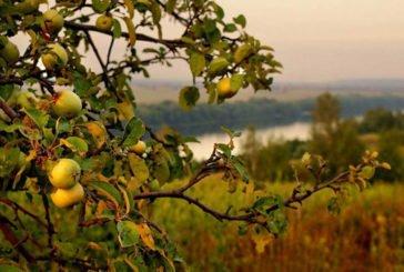 Надкушене яблуко