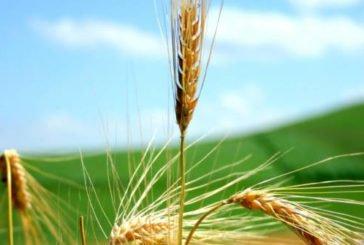 Операція «Урожай» «допомогла» працівникам агросектору Тернопільщини отримати вищу платню і вийти з «тіні»