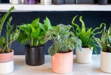 ТОП-7 кімнатних рослин, які очищають повітря
