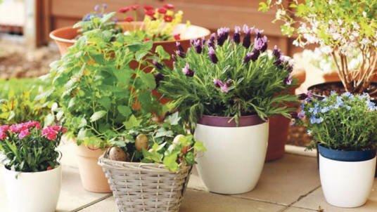 Поставте  ці рослини вдома – і забудьте про стрес