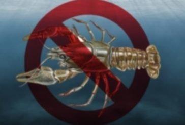 На Тернопільщині з 20 серпня до 30 вересня заборонено ловити раків