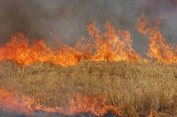 На Гусятинщині згоріло 1,7 гектарів пшениці