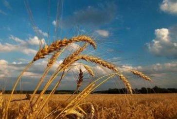Примхи погоди: сьогодні Україну розділять грози, шквали, град і 30-градусна спека