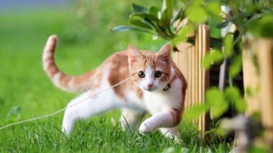 Кішки лікують!