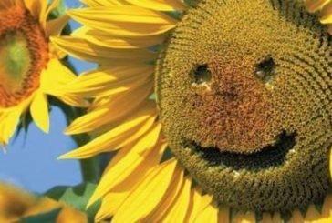 Сьогодні літо на осінь повертає