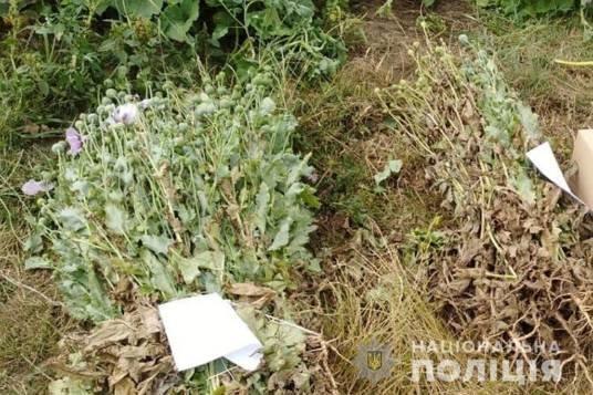 У поліції підрахували, скільки нарковмісних рослин вилучили у жителів краю