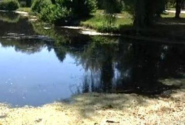 У Тернополі очистять водойми, що знаходяться в гідропарку «Топільче»