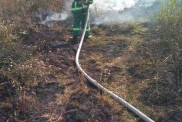На Бережанщині через підпал сухої трави ледь не згорало 180 гектарів лісу