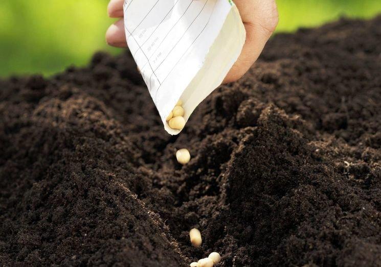 Сіємо осіннє добриво: сидерати збагачують ґрунт азотом і рятують від бур'янів