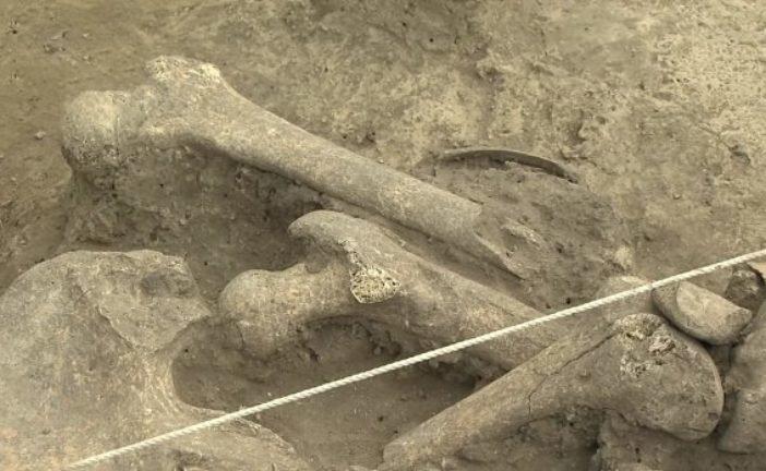 На Рівненщині знайшли рештки жінки, що жила 6 тисяч років тому: що здивувало археологів (ВІДЕО)