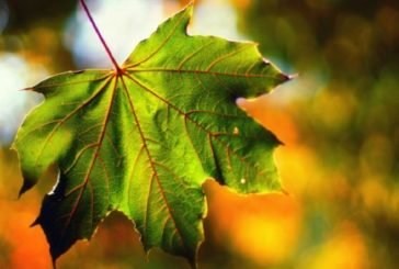 Сьогодні вересень даруватиме тепло: насолоджуйтесь, бо на порозі – холод і дощі