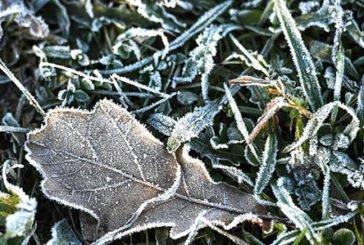 На Тернопільщині очікуються заморозки