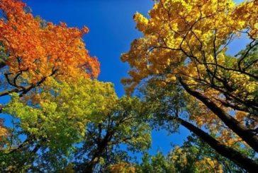 День 11 вересня завершує літо: «Іван Пісний прийшов – літо красне відвів»