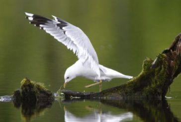 У Північній Америці загинули мільярди птахів