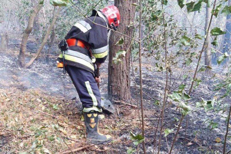 На Тернопільщині через підпал сухої трави могло згоріти 4000 гектари лісу (ФОТО)