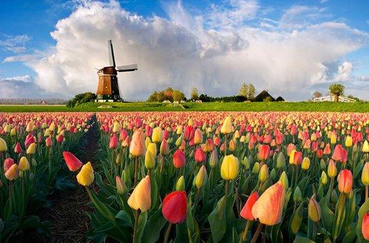 Нідерланди, а не Голландія