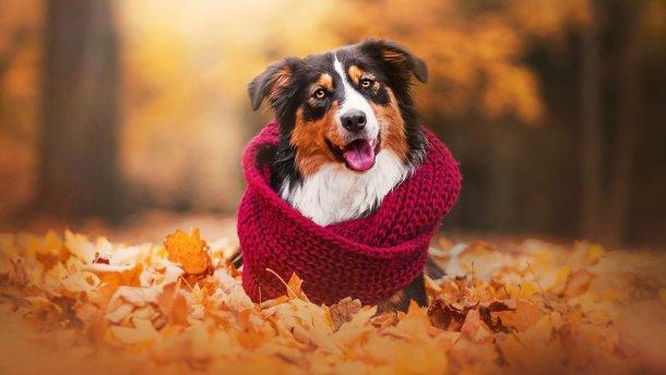 Прогноз погоди на 15 жовтня: не повірите, але – сухо, сонячно і тепло