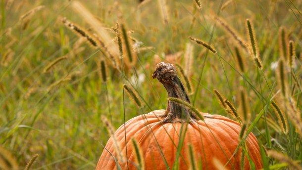 17 жовтня – яке сьогодні свято і що не можна робити в цей день