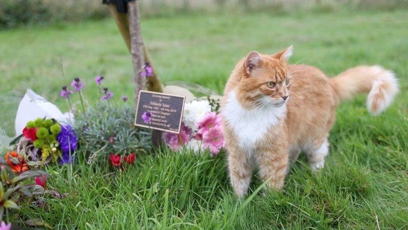 В Англії живе «похоронний кіт»