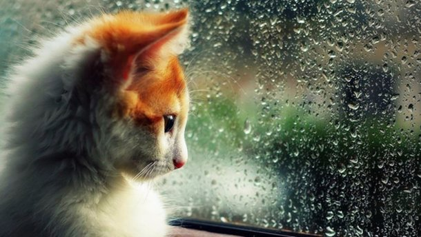 Четвер буде дощовим і прохолодним
