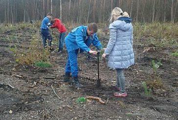 На Кременеччині учні й студенти допомогли висадити декілька гектарів лісу (ФОТО)