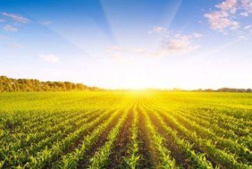 Вартість гектару землі у різних областях складе від 15 до 70 тисяч: скільки ж на Тернопільщині?