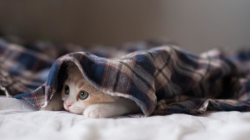 У понеділок – погожо й по-зимовому тепло