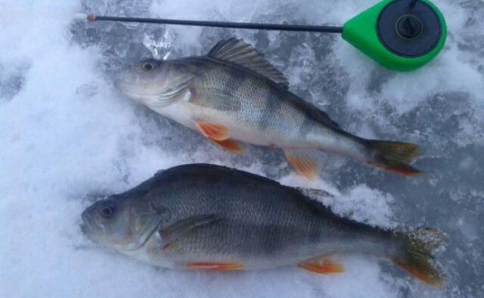 Тернопільський рибоохоронний патруль – про зимову рибалку