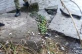 Браконьєри на річках Тернопільщини активно «працюють»