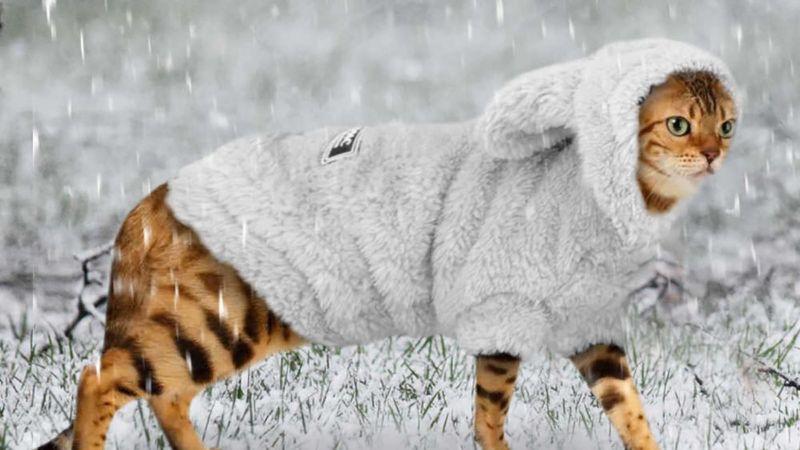 Введення прийшло – зиму привело: якою буде погода в середу