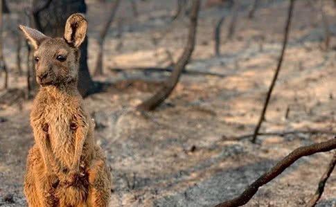 Від пожеж в Австралії загинуло близько 1,25 мільярдів тварин