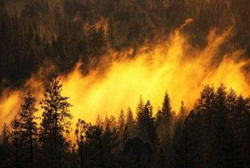 Зміни клімату та вирубка дерев провокують лісові пожежі у світі