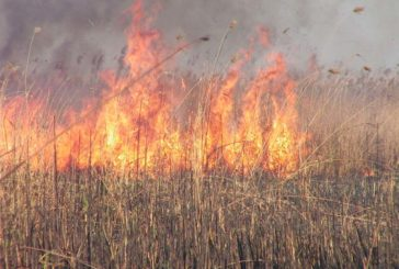 На Гусятинщині горіло 3 гектари очерету