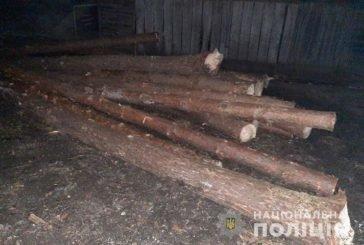 Вирубкою дерев мешканець Борщівщини заподіяв державі збитків на 24 тисячі гривень