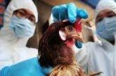 В Україні зареєстрували перший випадок пташиного грипу: як запобігти поширенню недуги
