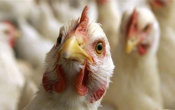 На Тернопільщині експерти розповіли, як уберегтися від пташиного грипу