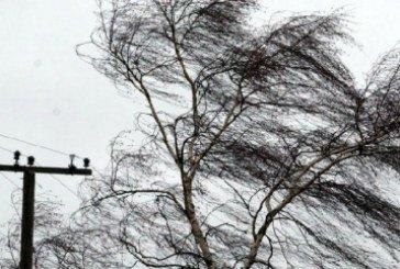 На Тернопільщині негода вимикала світло, валила дерева, зірвала дах