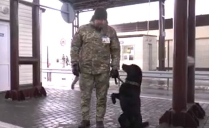 """Собака прикордонників відповідає на гасло """"Слава Україні"""": цікаве відео"""