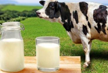 На Тернопільщині молоко в селян купують за низькими цінами