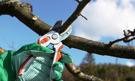 Щоб сад вродив рясно, доглядаймо вчасно: у лютому варто братися за обрізку дерев