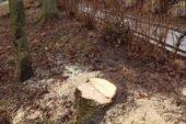 Хто в Тернополі самовільно вирізав каштани? (ФОТО)