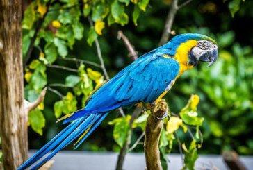 Британка навчила папугу співати оперні арії на зло сусідам