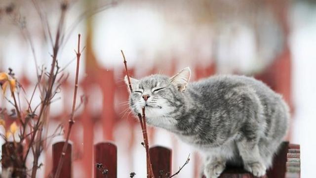 У неділю на Тернопільщині буде тепло, але можливий дощ